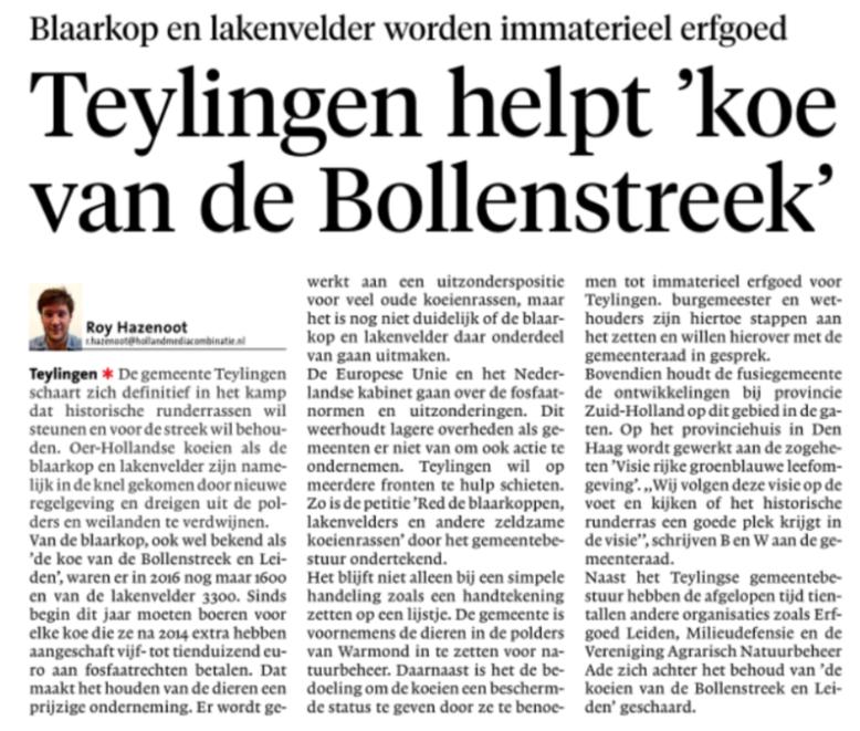 Leidsch Dagblad: Teylingen helpt 'koeien van de Bollenstreek'